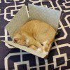 cat-in-a-box-orange-600x800.jpg