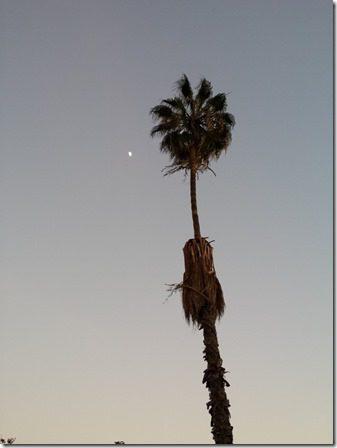 tall trees (600x800)