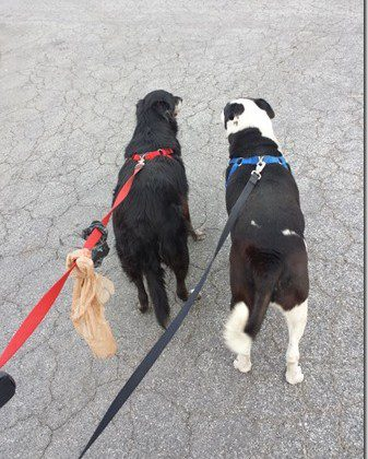 walking-the-dogs-600x800_thumb.jpg