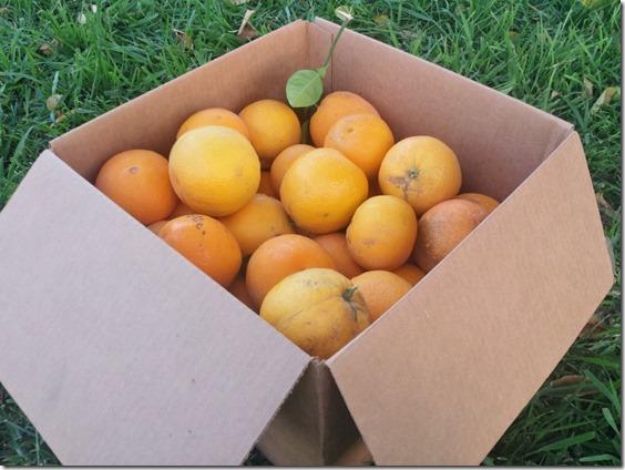 all the oranges (800x600)