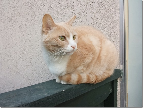 cat blog weirdo (800x600)