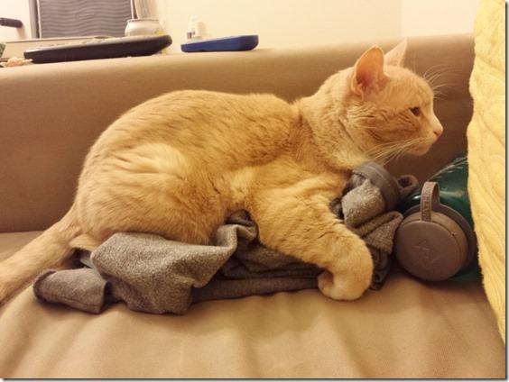 cat hugging sweater (800x600)