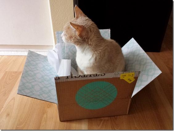 cat in a box (800x600)