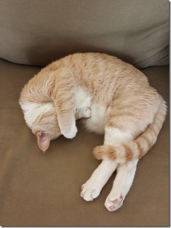 cat vibes (600x800)