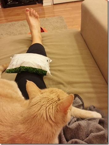 ice my knee with cat (600x800)