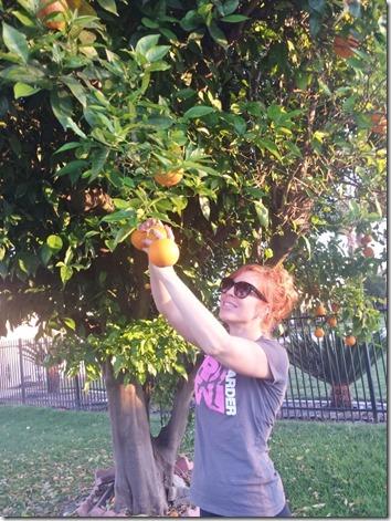 picking oranges (600x800)
