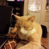 watching-the-duggars-with-my-cat-600x800_thumb.jpg