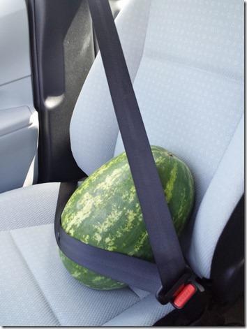 watermelon love blog (600x800)