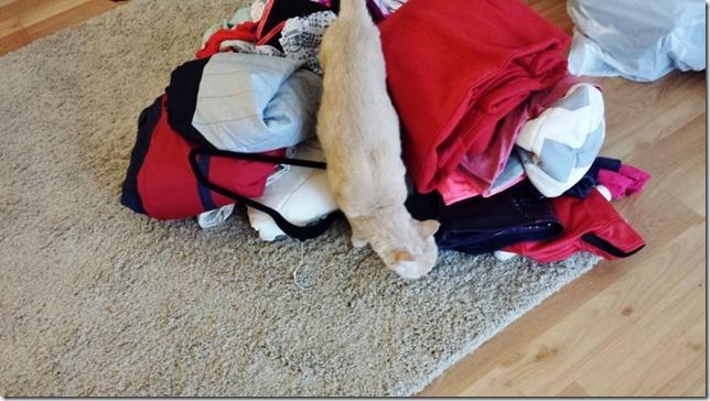 cat helping capsule closet orgazine blog (800x450)