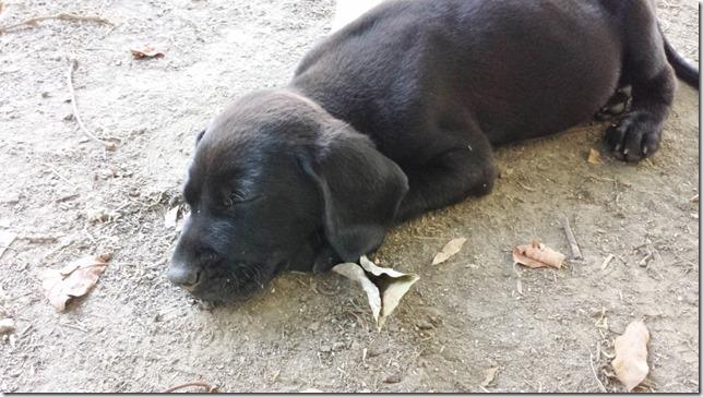 puppy life blog 1 (800x450)