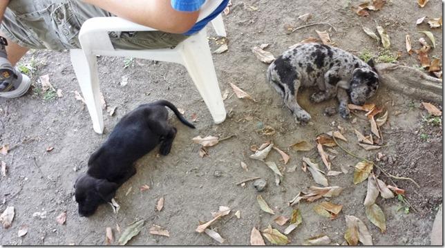 puppy life blog (800x450)