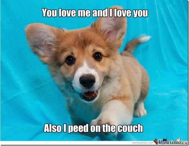 puppy life blog 8