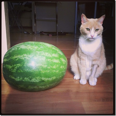 watermelon and a cat (800x800)
