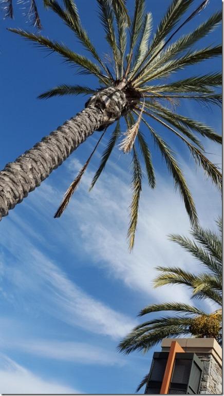 california dreamin (450x800)