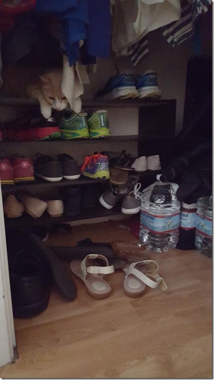 cat closet (450x800)