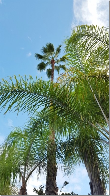 palm trees and warm breeze (450x800)