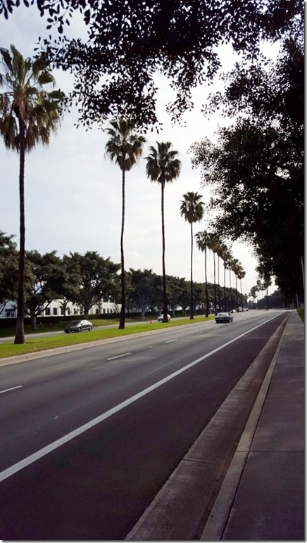 palm trees (450x800)