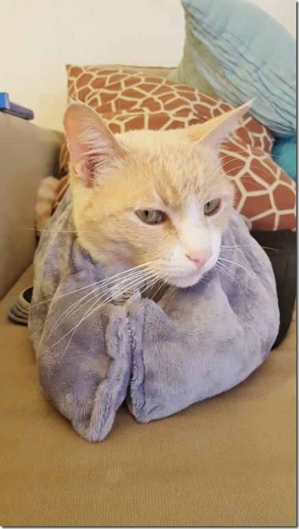 heavy blanket on cat (450x800)