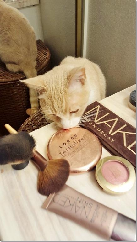 makeup cat (450x800)