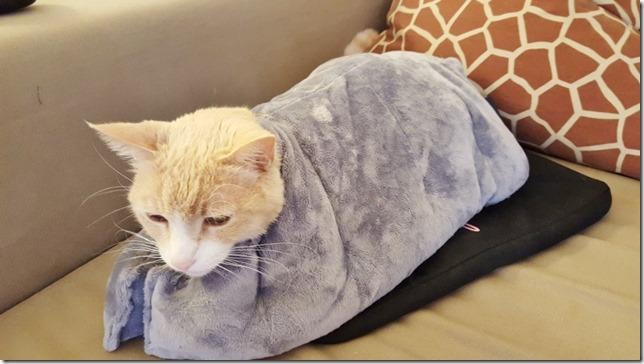 vegas likes the heavy blanket (800x450)