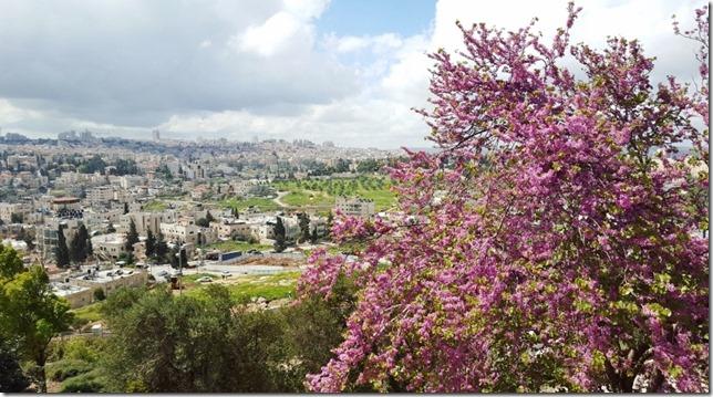 jerusalem marathon run blog 14 (800x450)