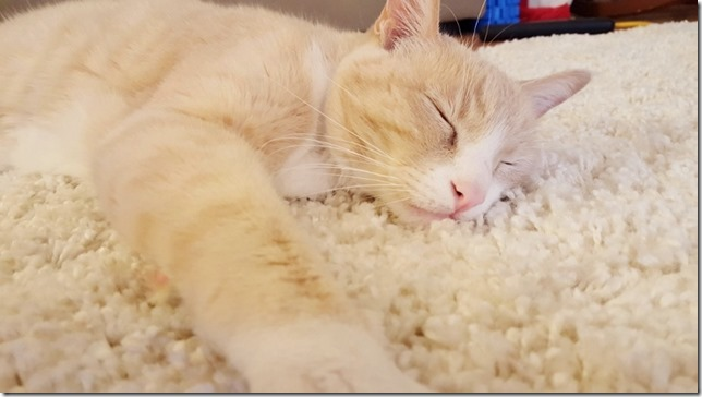 sleepy cat blog 1 (800x450)
