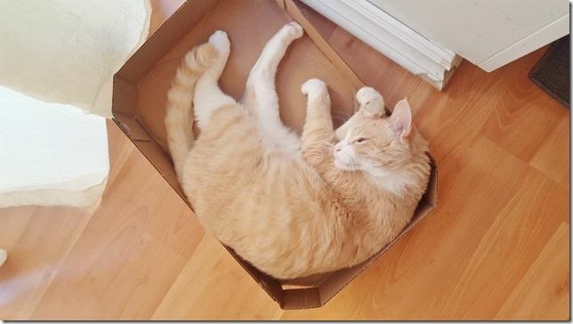 cat in a box costco (800x450)