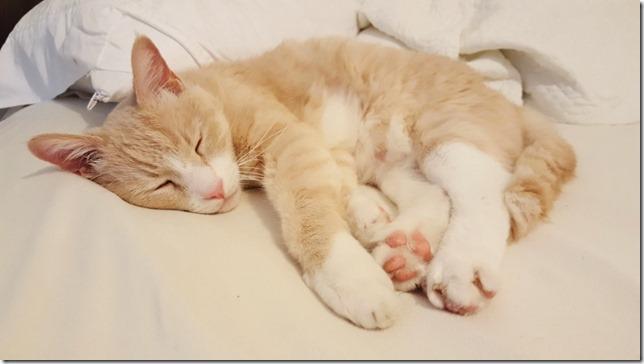 cute cat paws (800x450)