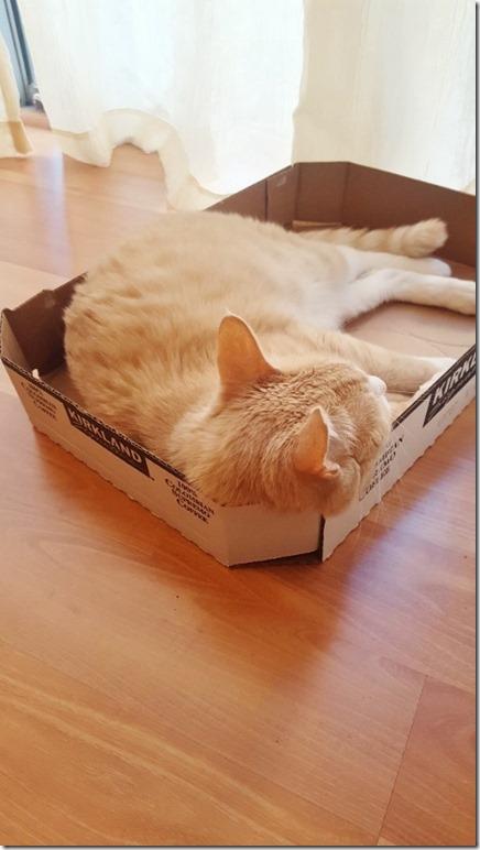 in a box (450x800)