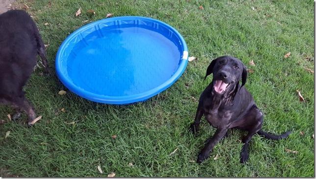 dog pool day blog 11 (800x450)