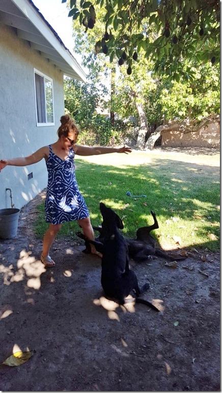 dog pool day blog 8 (450x800)