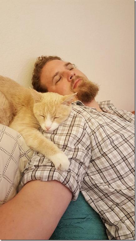 cat sleeping on shoulder (450x800)