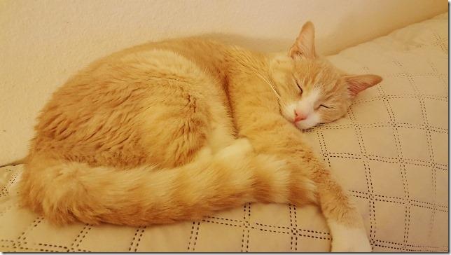 cute cat sleeper (640x360)