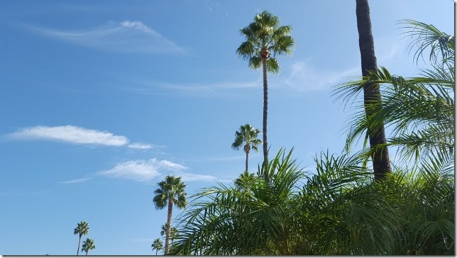 gorgeous california day (640x360)