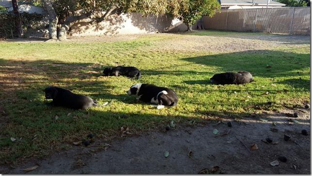 pups in their natural habitat (800x450)