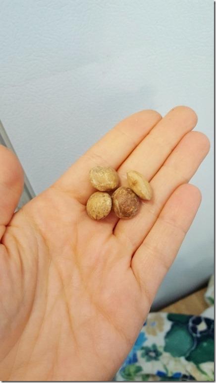 sancha seeds 1 (450x800)