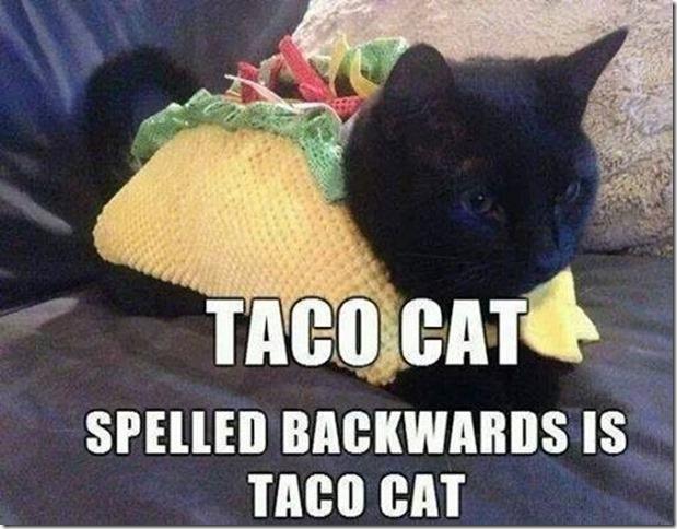 Cat Recipe Meme