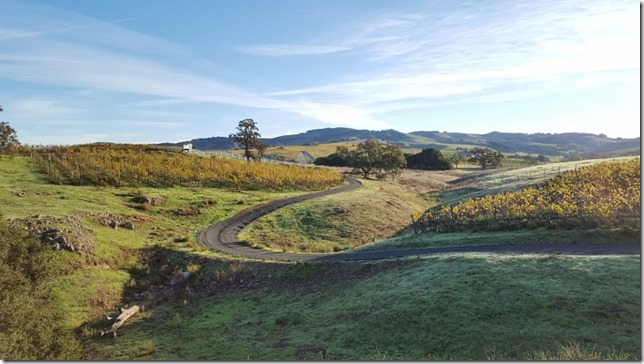 running in napa 25 (800x450)