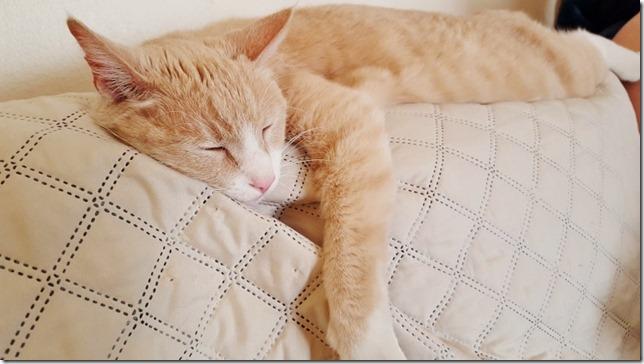 cat nap sunday (800x450)