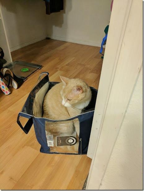 cat in cotainer (460x613)