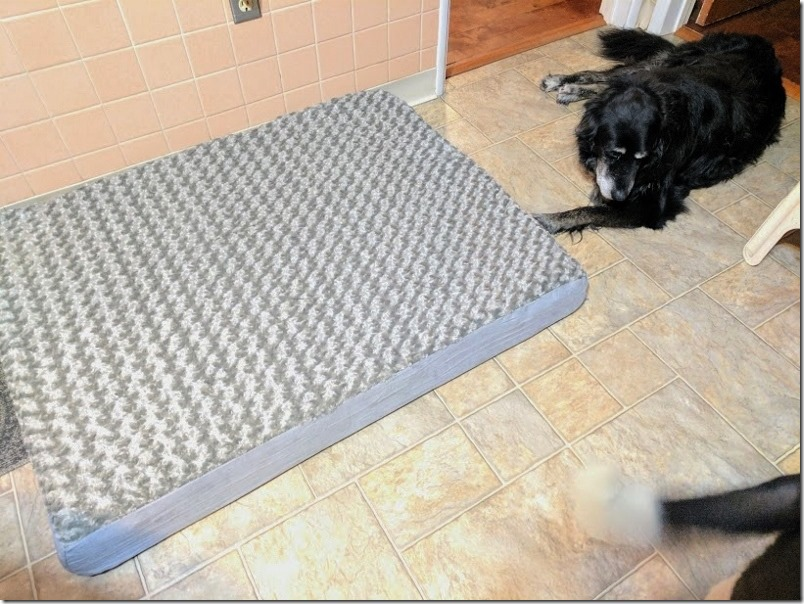 dog bed (800x600)