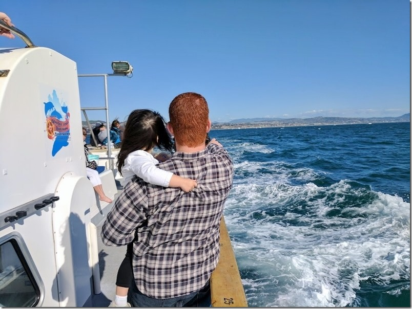whale watching in dana point california 24 (800x600)