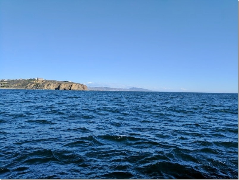 whale watching in dana point california 32 (800x600)