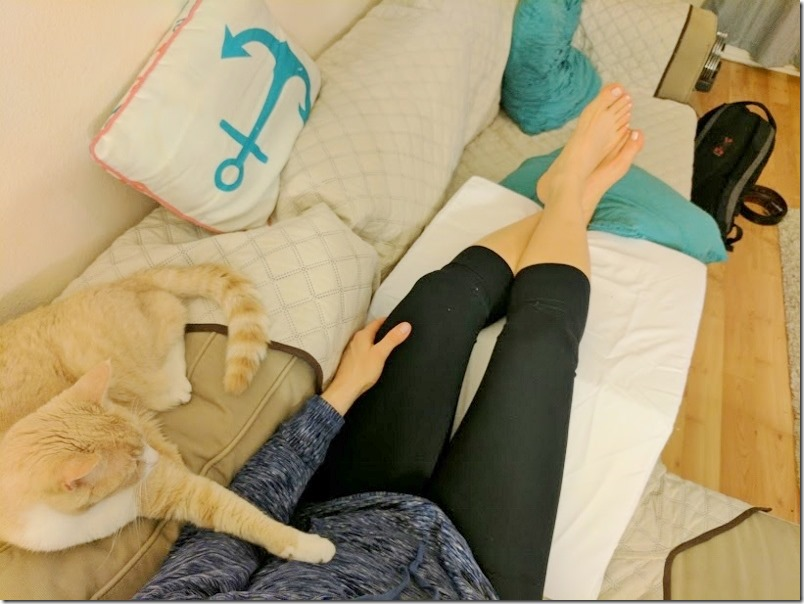 cat and wedge pillow (800x600)