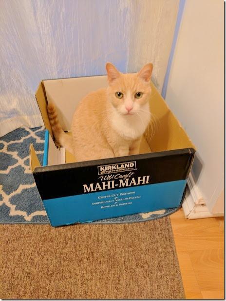 cat in box (460x613)