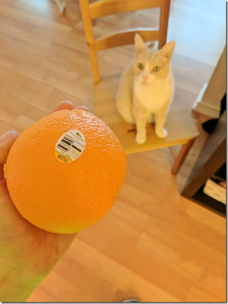 oranges and cat (460x613)