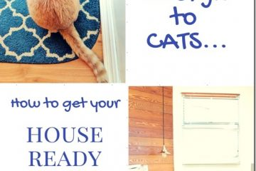 Friend Allergic to Cats? 5 Tips on How to Get Your House Ready for them