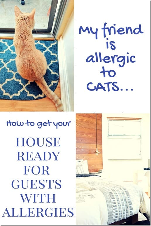 house guest with cat allergy