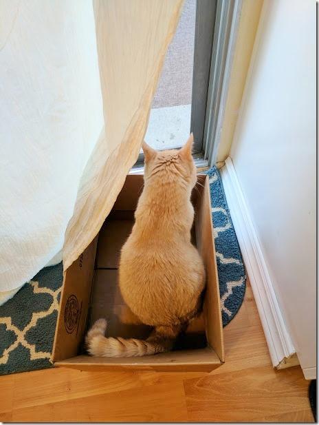 vegas in box (460x613)