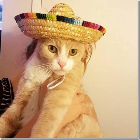 cat sombrero